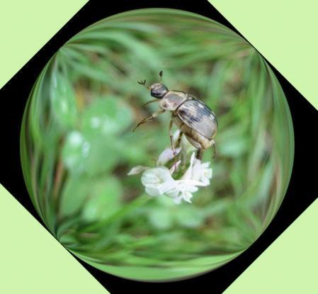 葉の梅の水玉と柳川 067
