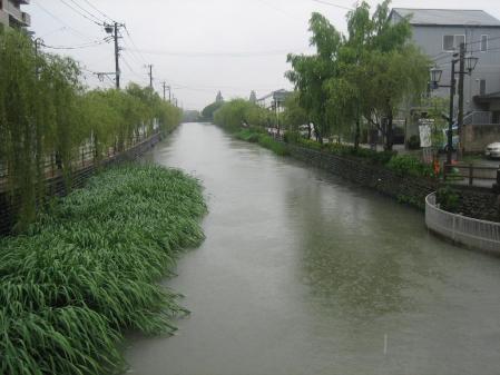 葉の梅の水玉と柳川 009