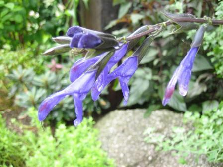 大角の花 061