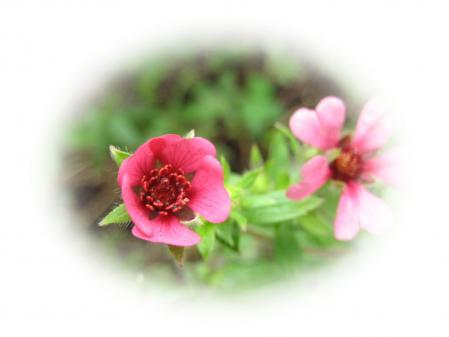 大角の花 043