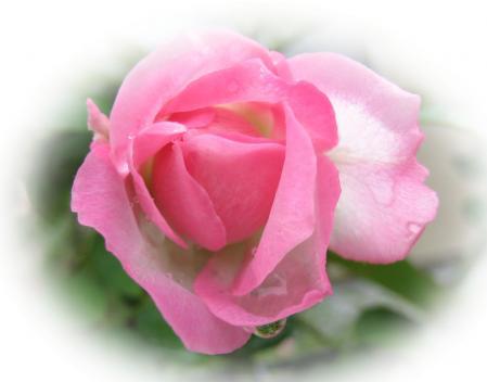 大角の花 080
