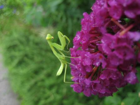 大角の花 072