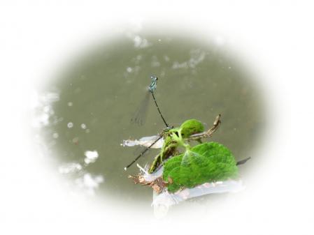 清水の花 016 - コピー