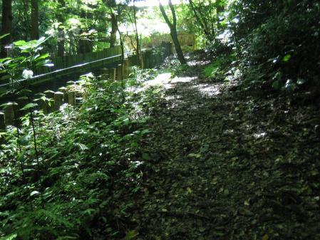 清水の花 2山道 053
