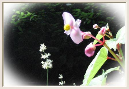 清水の花 2山道 108
