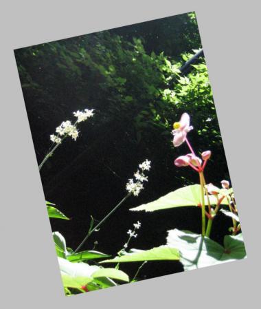 清水の花 2山道 109
