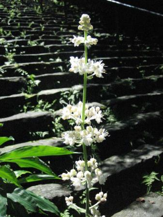 清水の花 2山道 090