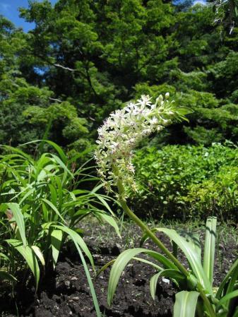 清水の花 2山道 158