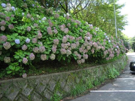 清水の花 2山道 178