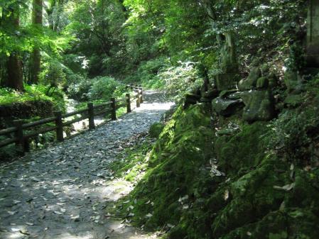 清水の花 2山道 174