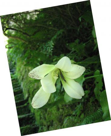清水の花 2山道 095