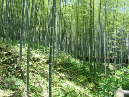 守山と京都 080