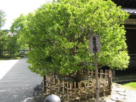 守山と京都 136