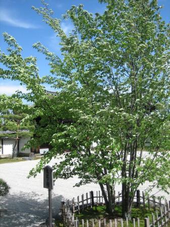 守山と京都 137
