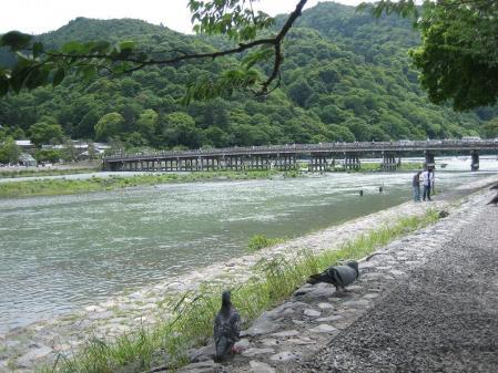 守山と京都 118