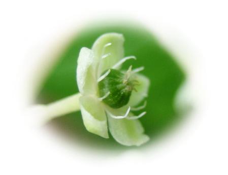 清水の花 020 - コピー