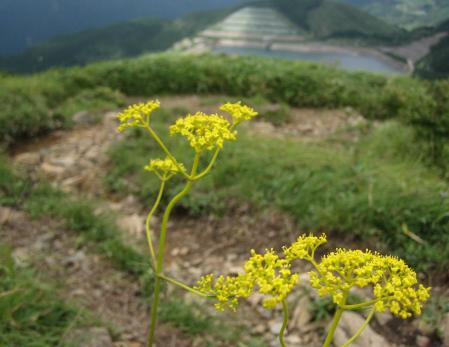 天山の花 120 - コピー