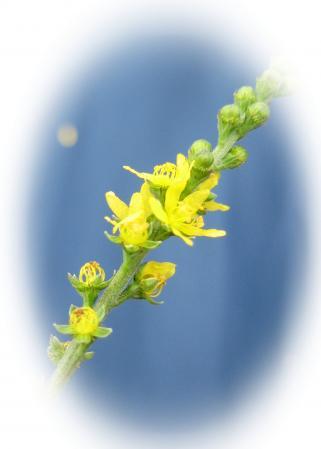 天山の花 3 055 - コピー