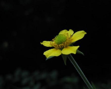 清水の花 065 - コピー