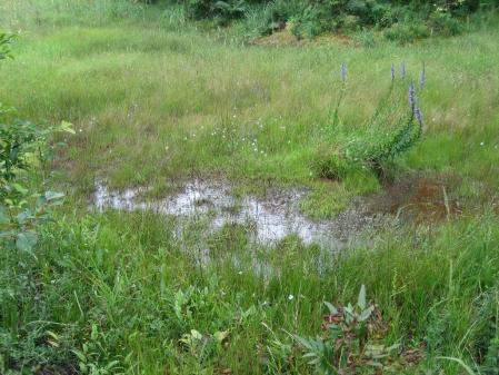 樫原湿原 1 059 - コピー