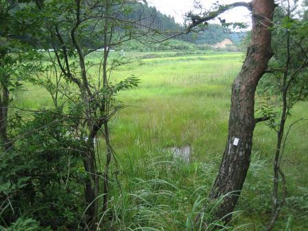 樫原湿原 1 058 - コピー