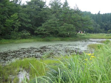 樫原湿原 2 029 - コピー