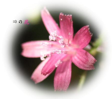 樫原湿原 2 082 - コピー