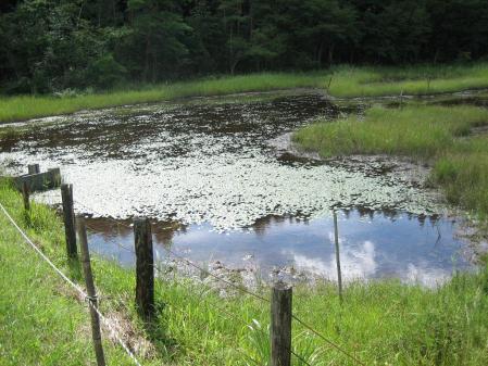 樫原湿原 2 066 - コピー