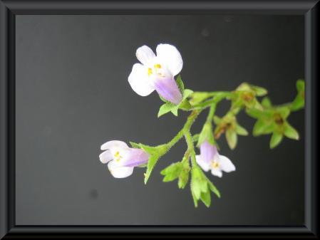 絵画にしたい花 010 - コピー (2)