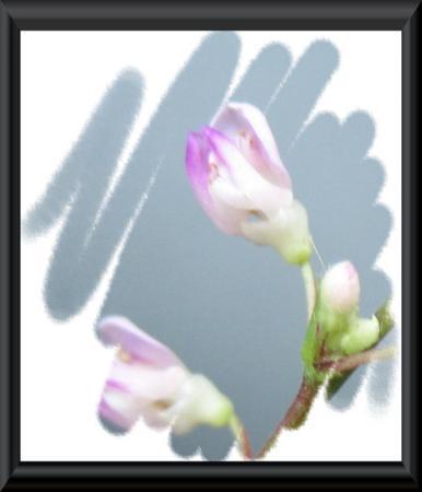 清水の花 2 026