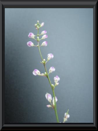 清水の花 2 024