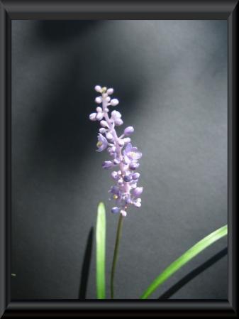 清水の花 1 035