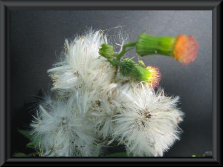 清水の花 1 029