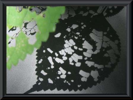 清水の花 1 016