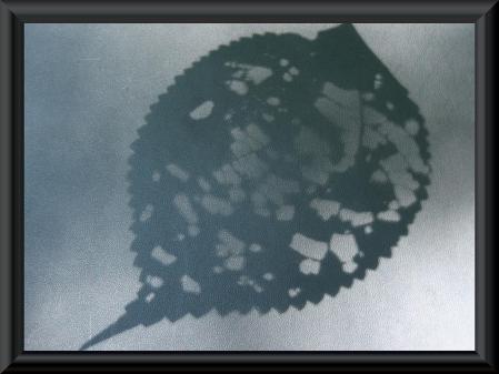 清水の花 1 019