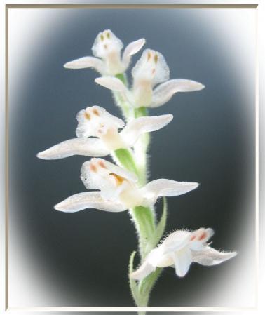 小岱山の花 美術館用 008 - コピー