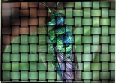 昆虫 005 - コピー
