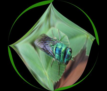 昆虫 004 - コピー