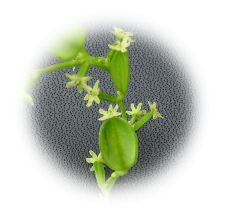 作礼山の花 024