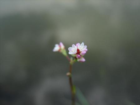 作礼山の花 059 - コピー