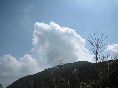 作礼山の花 080 - コピー
