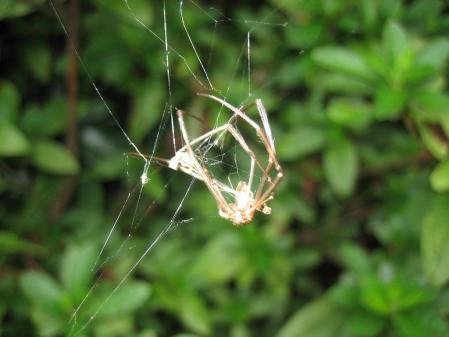 蜘蛛 006