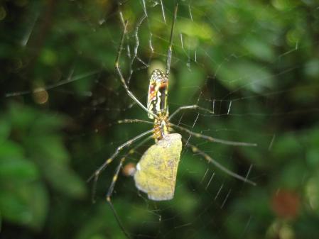 蜘蛛 003