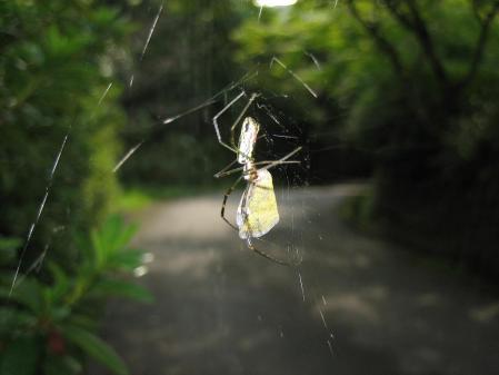 蜘蛛 004