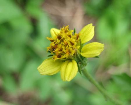 牛津の花 064