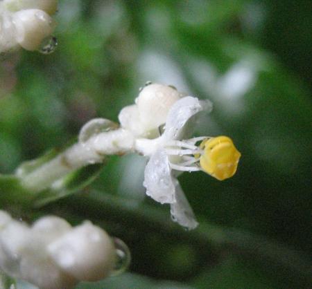 秋雨の清水山 025 - コピー