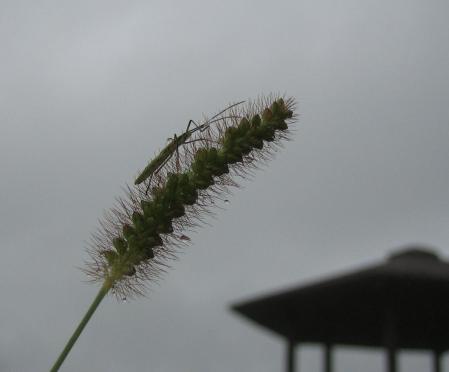 秋雨の清水山 071 - コピー