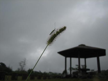 秋雨の清水山 069 - コピー