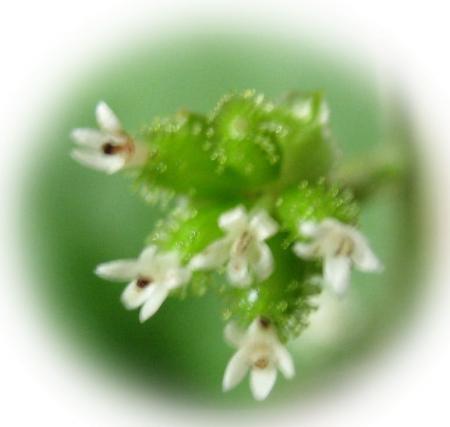 カラ迫山の花 019 - コピー