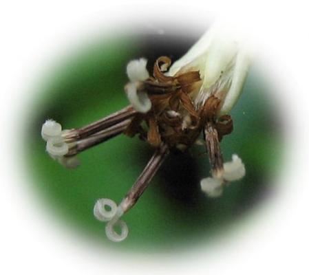 カラ迫山の花 074 - コピー